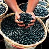 Acai berry health benefits
