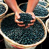 Acai berry health benefits